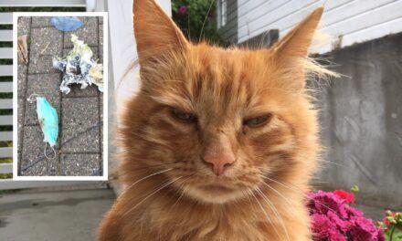 Katten Haakon (10) rydder søppel i nabolaget – Karmøynytt