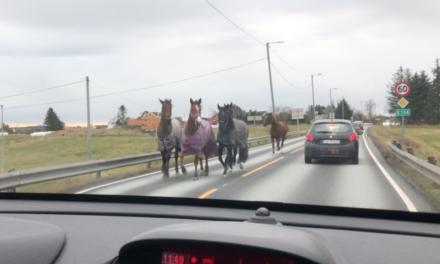 Hester på ville veier – Karmøynytt