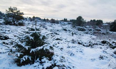 Karmøy satte ny kulderekord i februar – Karmøynytt
